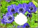 *Trés fleurs bleue*