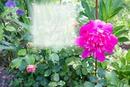 Cadre Fleurs & Roses