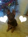 l amour d un chien