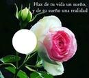 Bella rosa con texto