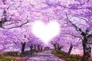 Coeur du printemps