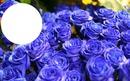 Bouquet de roses bleues