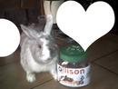 bunny lapin