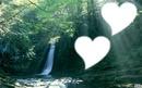 deux coeurs dans la forêt