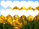 10 coeurs en tulipes