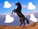 l'amour autour du cheval