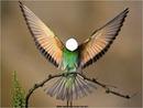 Hombre colibri