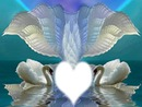 coeur et cygnes