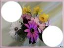 Beautée des fleurs*