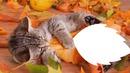 chaton dans les feuilles mortes 1 photo