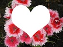 coeur dans les oeillets