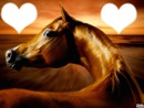 Cheval amour