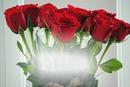 Rosas Feliz Aniversário
