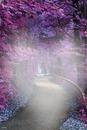 Vereda violeta