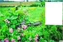 Nature & fleurs