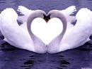Fotos De Amor ¡¡¡