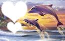 dauphin qui saute au coucher du soleil