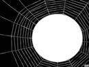 cadre spider