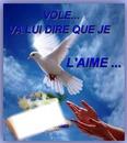 une colombe pour l amour