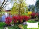 jardin japonais lac