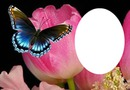 tulip an butterfly