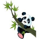 panda 1 photo