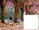Bicyclette-arbres en fleurs