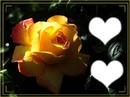 rose avec deux coeurs