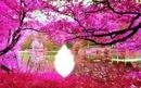 étang rose