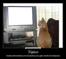 GATO TV