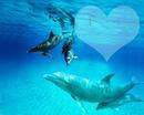 dauphin bleu