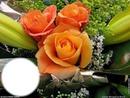3 roses oranges