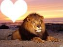 Lion avec couchéde soleil