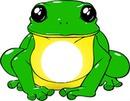 sapo / frog