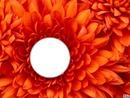 Tu es dans la fleur