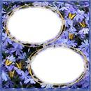2 photos fleurs papillons iena