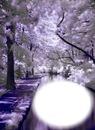 Paysage blanc et mauve