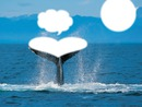 baleine dans l' océan