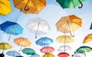 guarda -chuva