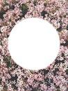 Fleur de la vie <3