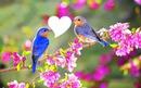 entre deux oiseaux