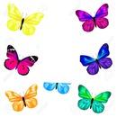 papillons multicolores 1 photo