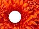 Rond dans fleur