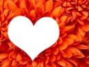 Love fleurs