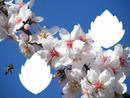 flores no campo abelha