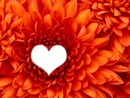 fleur de coeur