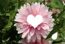 fleur <3