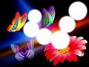Papillons et fleur