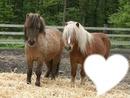 poney avec coeur