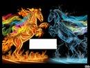 chevaux en feu et eau 1 photo
